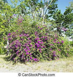 botany garden, Cienfuegos, Cuba - botany garden, Jardin...