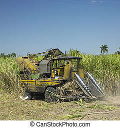 sugar cane harvest, Cuba - sugar cane harvest, Sancti...