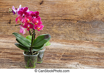 Spring violet orchids - Pink flowering orchids on wooden...