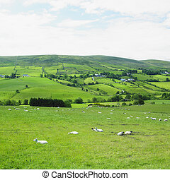 Sperrin Mountains, County Tyrone, Northern Ireland