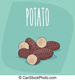 Isolated ripe russet potato tubers whole and cut - Group of...