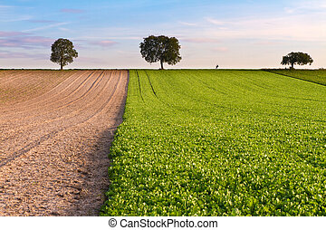 Fields with trees and walker, Pfalz, Germany