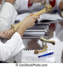 education university student bone anatomy biology - close up...