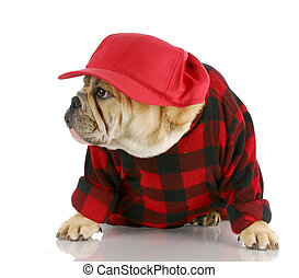 country dog - adorable english bulldog wearing trucker hat...