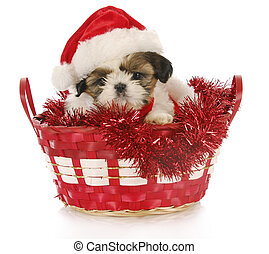christmas puppy - adorable shih tzu puppy sitting in...