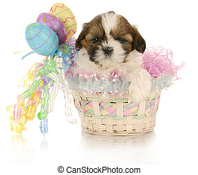 easter puppy - adorable shih tzu puppy sitting in easter...