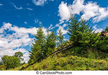 spruce trees on a slope under the blue sky. beautiful nature...