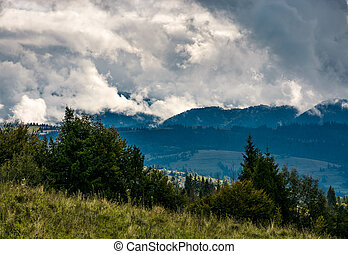 forest on hillside on cloudy day. gorgeous weather in...