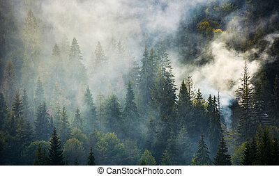 smoke rise above spruce forest. beautiful background with...