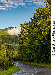 winding road through forest in mountains. lovely...
