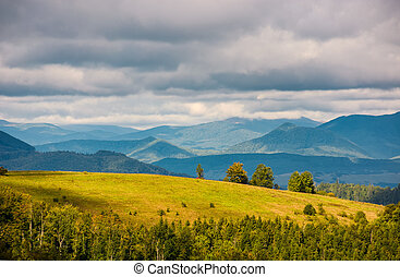 grassy meadow with few trees on hill. lovely mountainous...