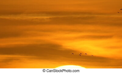 Amazing, beautiful orange sky sunset with duck birds flying...