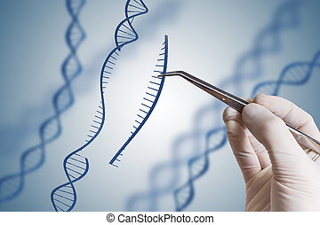 Genetic engineering, GMO and Gene manipulation concept. Hand...
