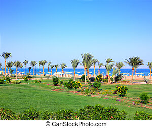 green lawn and palm trees on beach