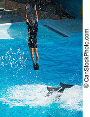 Show with dolphins. Man jumping out of the water.