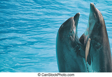 Two dolphins dancing in water. Place for text.