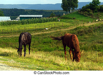 Rural life: horses grazing on the will on the background of...