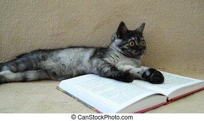 Gray kitten lies on an open book - A gray kitten lies on an...