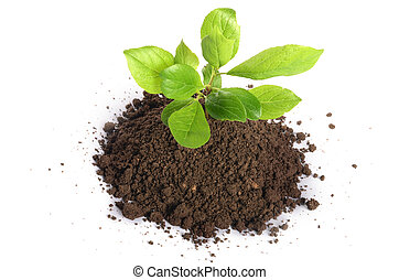 Green plant growing in soil isolated on a white - Plant...