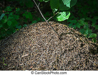 anthill - an anthill in the forest