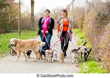 Dog sitters walking their customers in a park