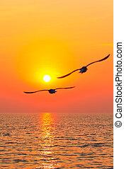 voando, Pássaros, pôr do sol
