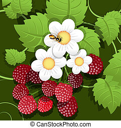 raspberry - illustration, red raspberry, white flower and...