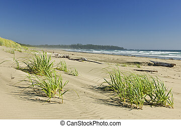 Ocean shore in Pacific Rim National park, Canada