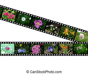 Films with images of flowers