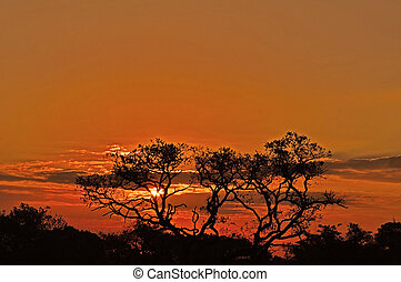 Sunset in Africa - Sunset over trees in South Africa