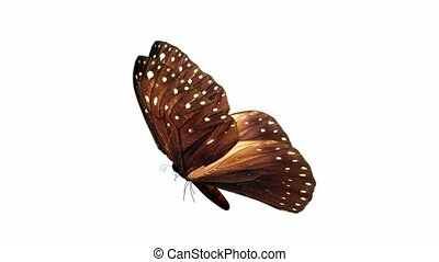 Butterfly - A butterfly flying on a white background