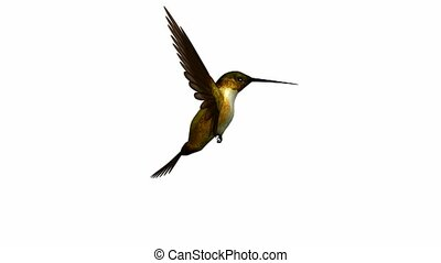 Hummingbird flying on a white background