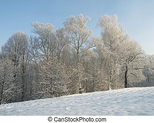 The winter in Poland