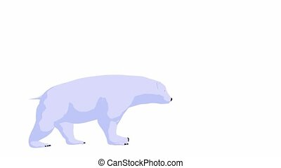 Polar Bear - Polar bear walking on a white background