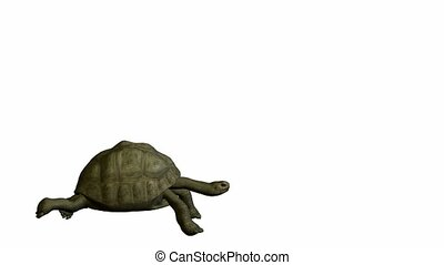Turtle walking on a white background