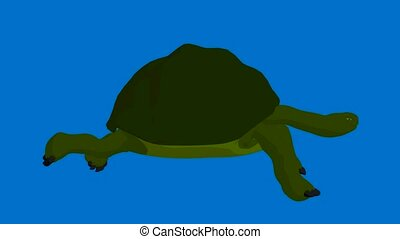 Turtle walking on a blue background