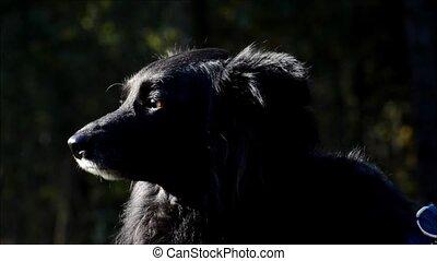Black dog in People's Park (Volkspark) Rehberge in...