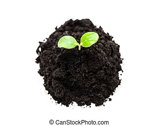 Small green plant sprout leaf growth at dirt soil heap