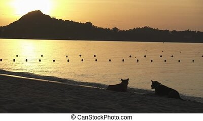 Dogs on background of sunrise on Lamai Beach in Koh Samui...