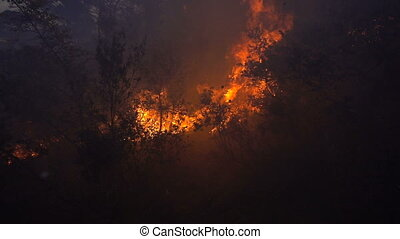 Fire storm in the forest at dusk, slow motion