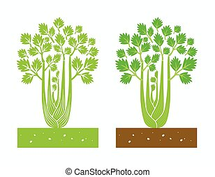 celery plant with leaves