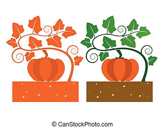 pumkin plant with leaves and produce