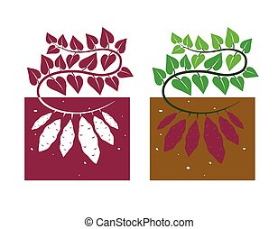 sweet potato plant with leaves and tubers,vector...