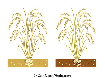 rice plant with  leaves and seeds