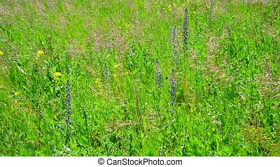 Fragment of wild meadow with flowers and plants - Fragment...