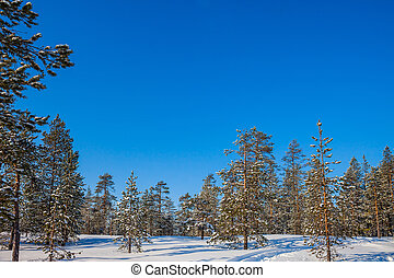 Snowy northern winter in Lapland - In deep snow there are...