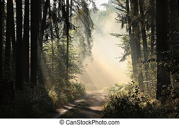 Rural road through the forest at dawn