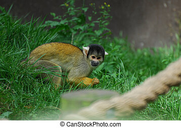 Marmoset - A marmoset playing in a Zoo