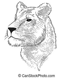 Lioness - Vector lioness represented in the form of a tattoo