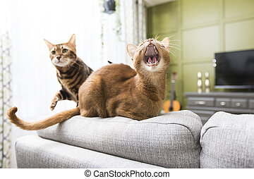 Cats in the living room on the couch - Two Cats in the...